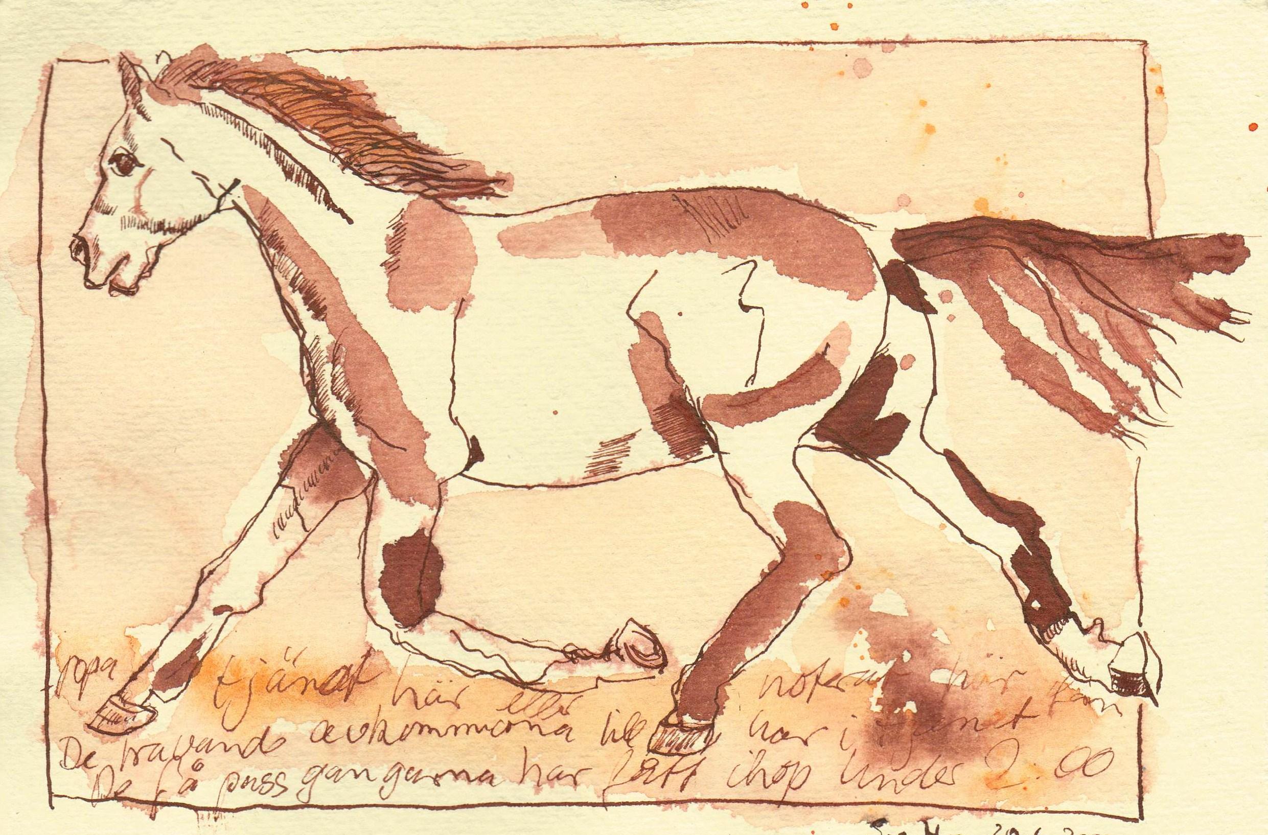 Pferd - Zeichnung von Susanne Haun - 15 x 20 cm - Tusche auf Bütten