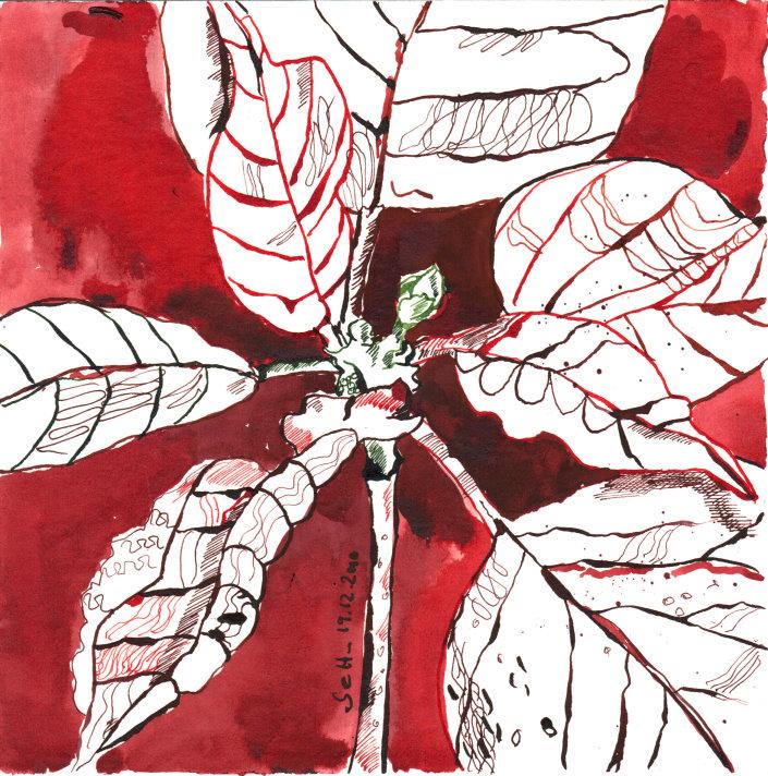 Weihnachtsstern - Zeichnung von Susanne Haun - 20 x 20 cm - Tusche auf Bütten