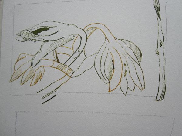 Ich beginne noch ein Blatt - eigentlich möchte ich zwei Studien fertigen - Susanen Haun