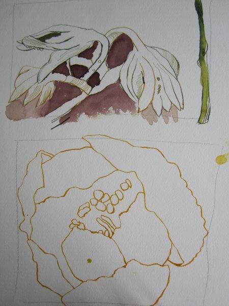Die offene Blüte läuft über meine Rahmen für die Skizzen hinaus - Susanne Haun