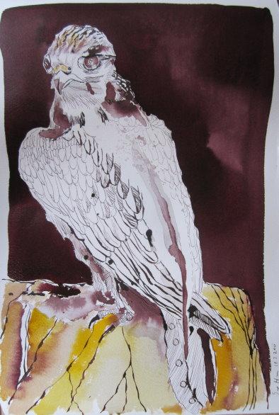 Falke - Zeichnung von Susanne Haun - 50 x 32 cm - Tusche auf Bütten