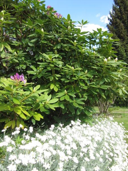 Blumen in meines Elterns Garten - Foto von Susanne Haun