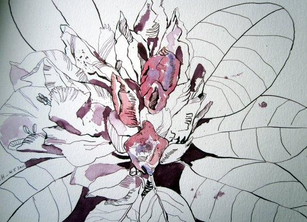 Entstehung Zeichnung Rhododendron von Susanne Haun