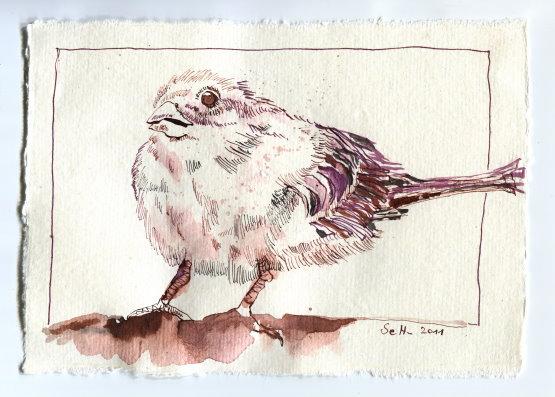 Sperling - Zeichnung von Susanne Haun - 15 x 20 cm - Tusche auf Bütten