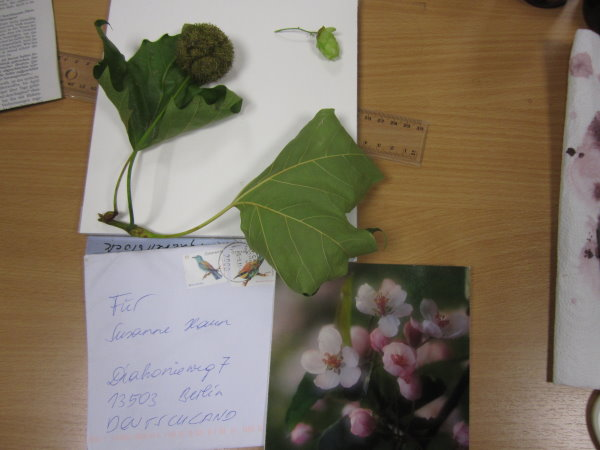 Wilder Hopfen und noch was Grünes und eine Karte zum Einzug - Foto von Susanne Haun