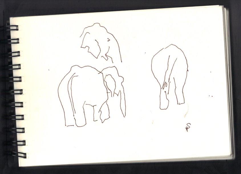Skizze Elefanten von Susanne Haun