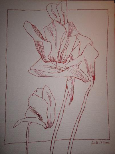 Usambaraveilchen - Zeichnung von Susanne Haun - Tusche auf Bütten - 40 x 30 cm