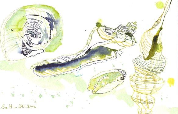 Muschelzeichnung - von Susanne Haun - Tusche auf Bütten 18 x 26 cm