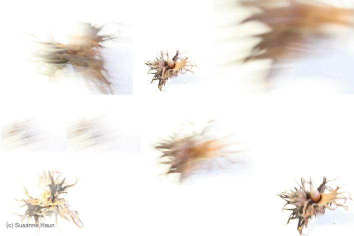 Intelligenz und Bewegung I (c) Foto von Susanne Haun