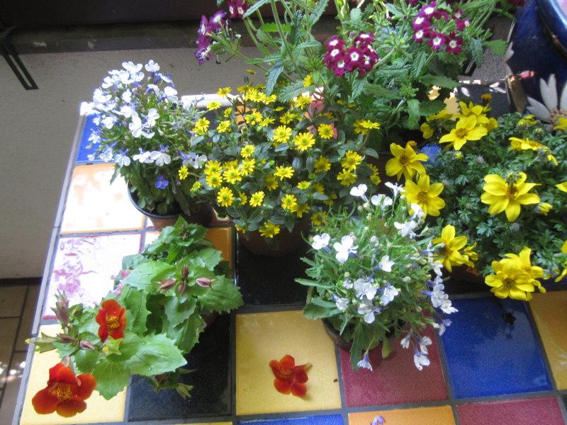 Auf dem Balkon Blumen pflanzen (c) Susanne Haun
