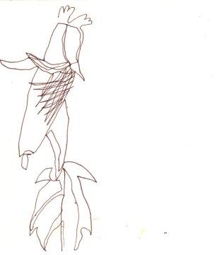 Die unendliche Linie im Stiefmütterchen (c) Skizze von Susanne Haun