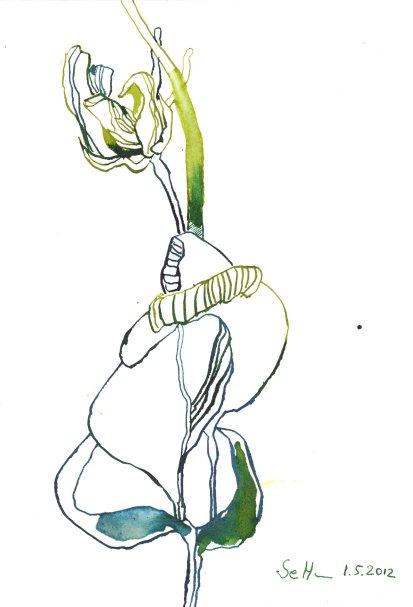 Löwenmäulchens Beginn (c) Zeichnung von Susanne Haun