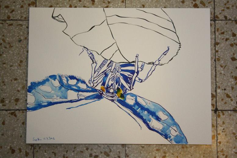 Insekt 30 x 40 cm Tusche auf Hahnemühle Bütten (c) Zeichnung von Susanne Haun