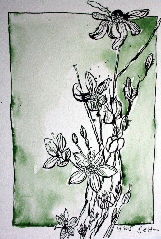 Blumenwiese 17 x 22 cm Tusche auf Bütten (c) Zeichnung von Susanne Haun