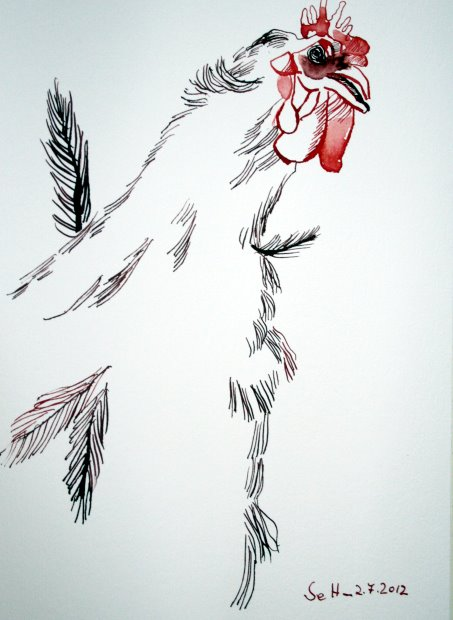 Hahn 17 x 22 cm Tusche auf Bütten (c) Zeichnung von Susanne Haun (3)