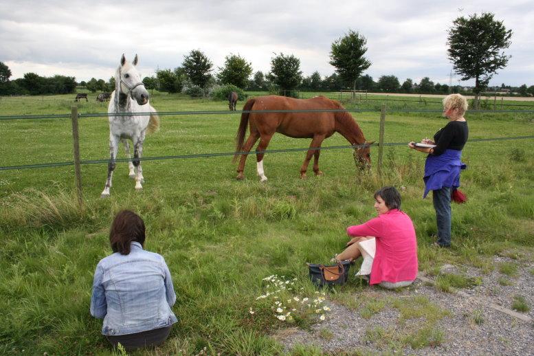 Ein Nachmittag bei den Pferden (c) Foto von Susanne Haun