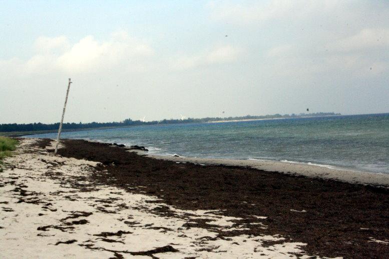 Der Strand von Marielyst (c) Foto von Susanne Haun