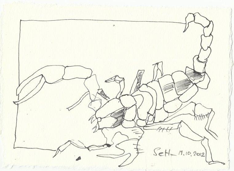 Blatt 14 Skorpione, die zwischen den Steinen krochen (c) Zeichnung von Susanne Haun