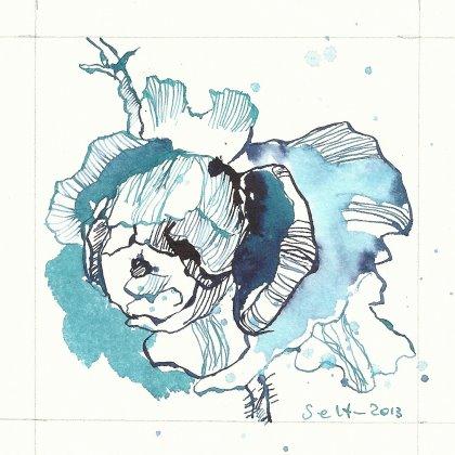 Es blüht so blau (c) Zeichnung von Susanne Haun