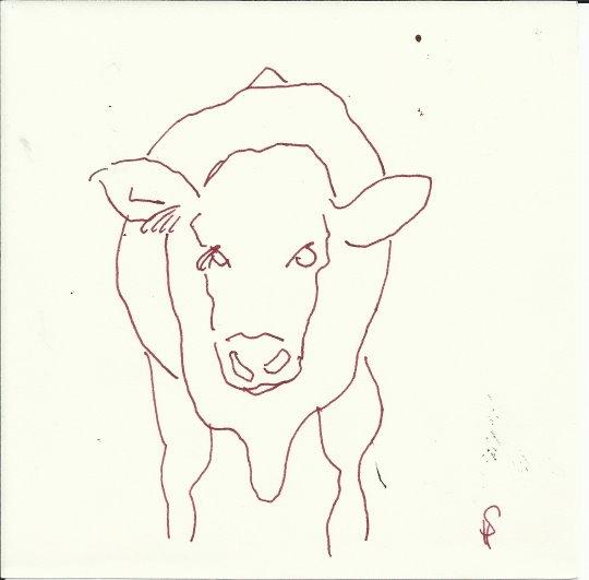 Heiligenseer Kühe auf der Weide (c) Zeichnung von Susanne Haun