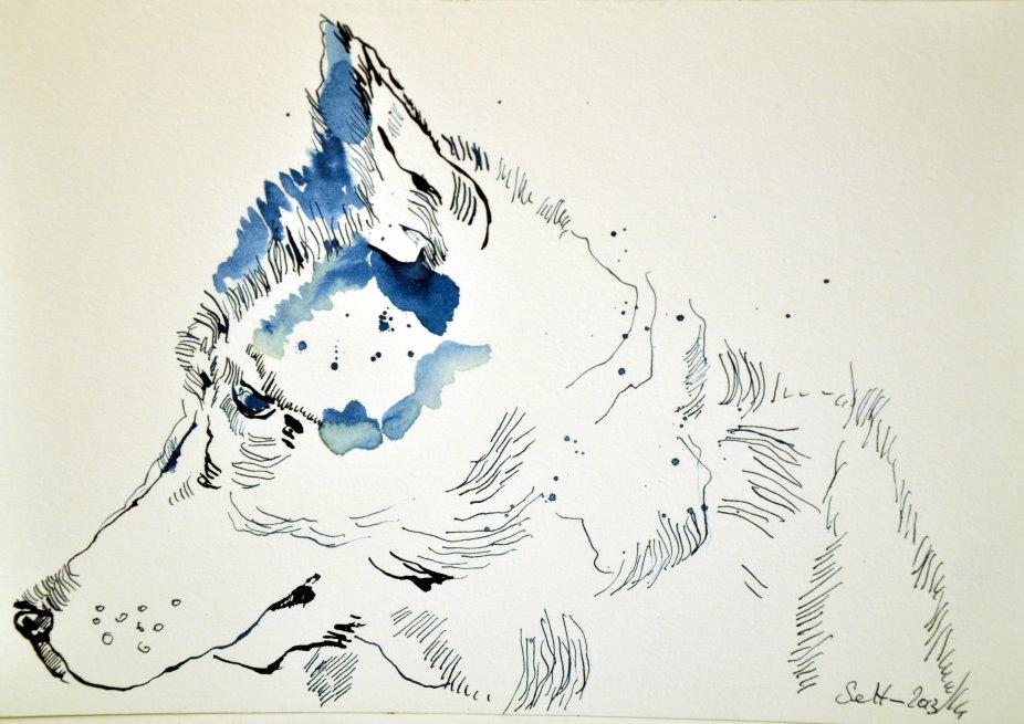 Polarhund - 17 x 22 cm - Tusche auf Bütten (c) Zeichnung von Susanne Haun