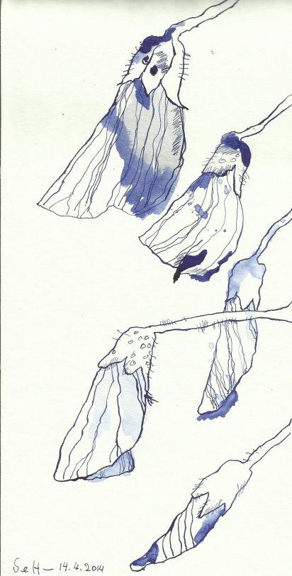 Glyzinien Version 2 (c) Zeichnung von Susanne Haun