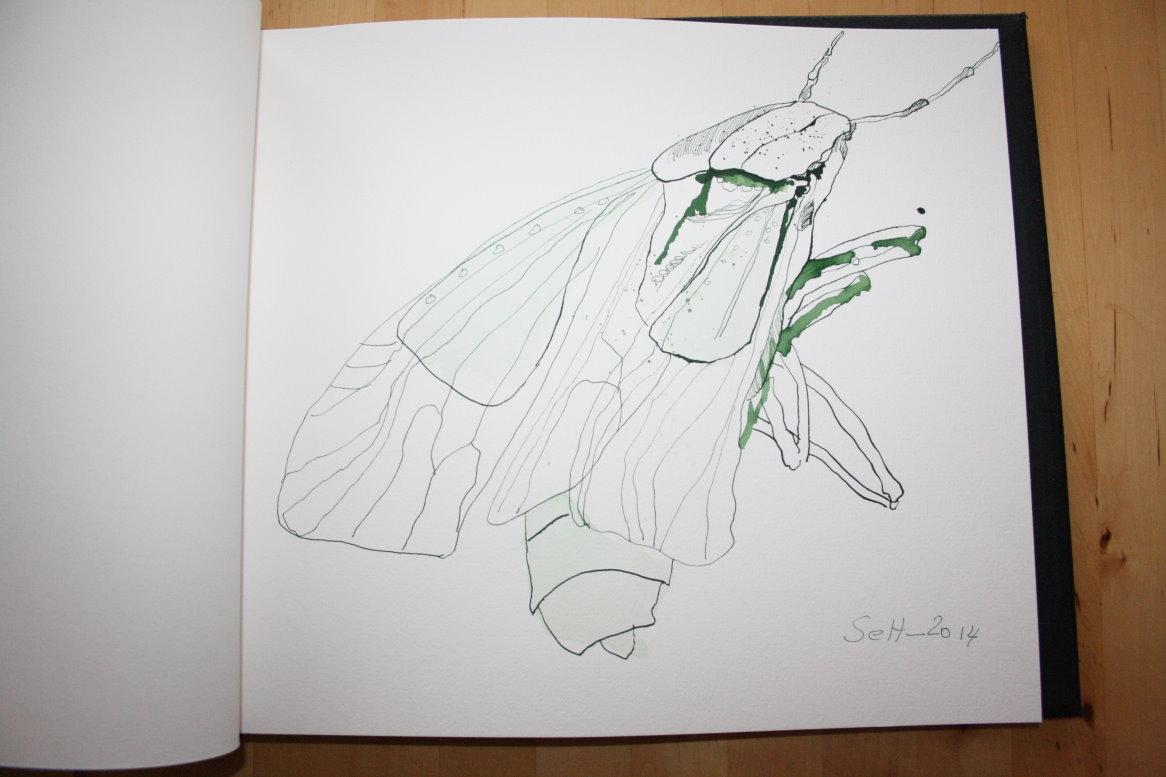 Käfer in der Toskana - Aquarellbuch - Blattgröße 33 x 30 cm (c) Zeichnung von Susanne Haun