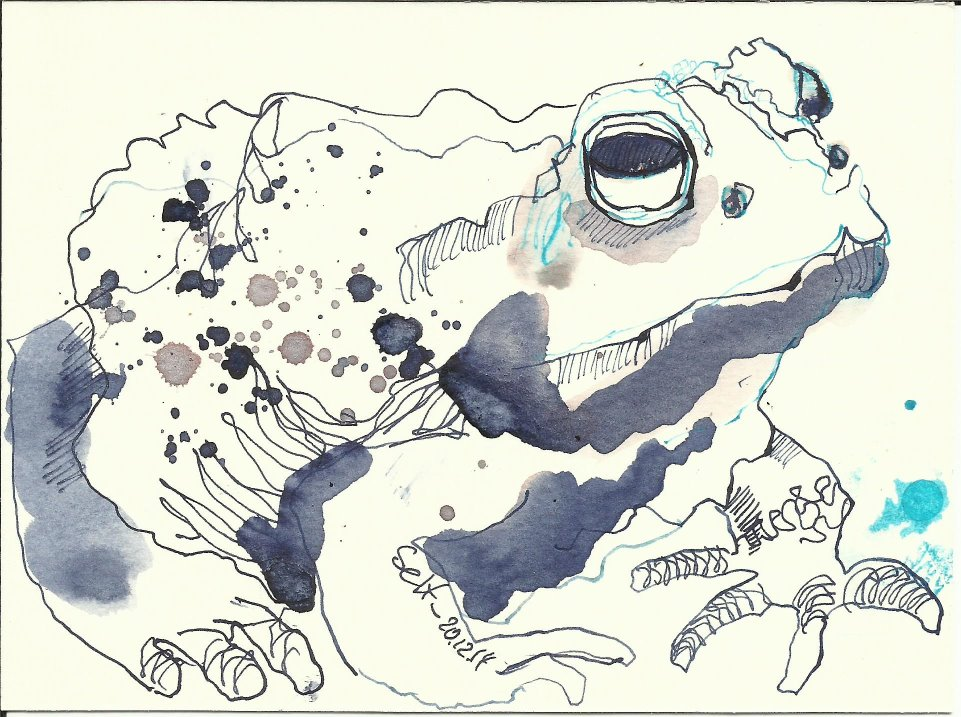Kröte Vers. 2 (c) Zeichnung von Susanne Haun