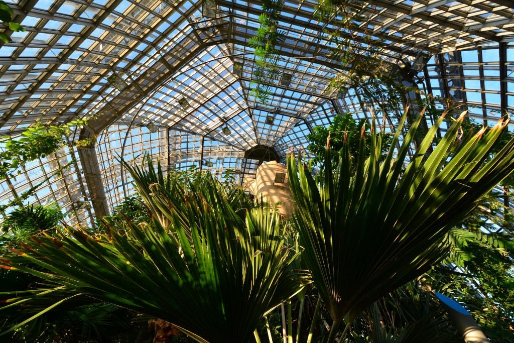 Grosses Tropenhaus im Botanischer Garten (c) Foto von M.Fanke