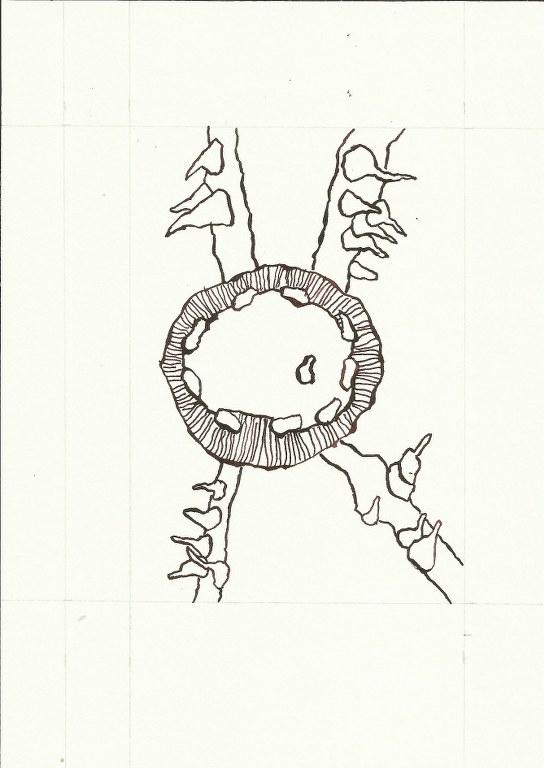 Dialog Bewusst-Sein Blatt 5 Vers. 2 (c) Zeichnung von Susanne Haun