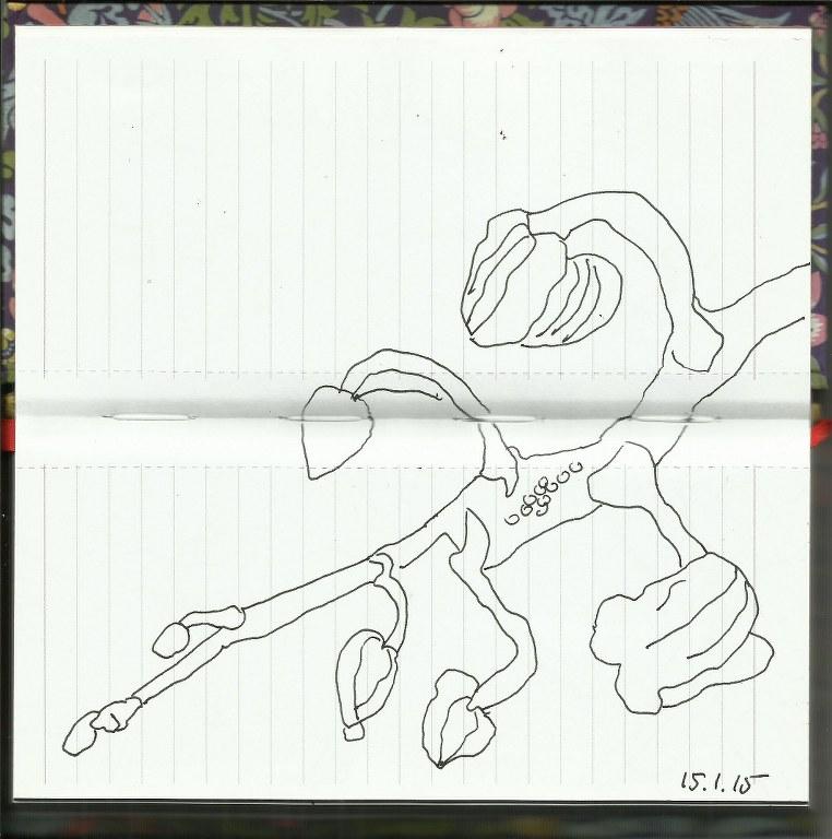 Orchideenzweig (c) Zeichnung von Susanne Haun