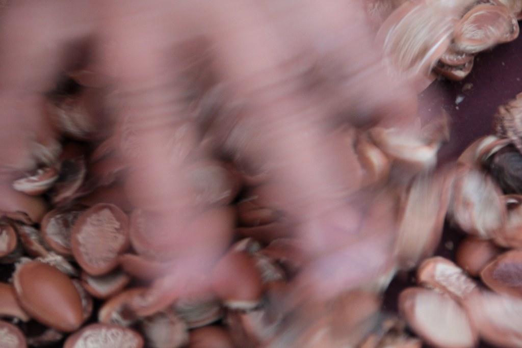 Arganfrüchte (c) Foto von Susanne Haun