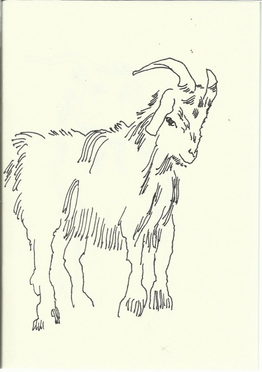 Ziege (c) Zeichnung von Susanne Haun