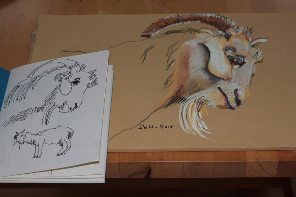 Ziege mit aus Marokko mitgebrachter Zeichnung (c) Pastellzeichnung von Susanne Haun
