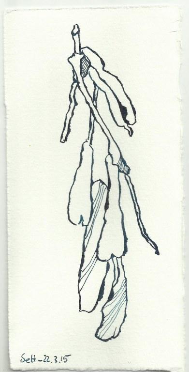 Natur (c) Zeichnung von Susanne Haun 0002