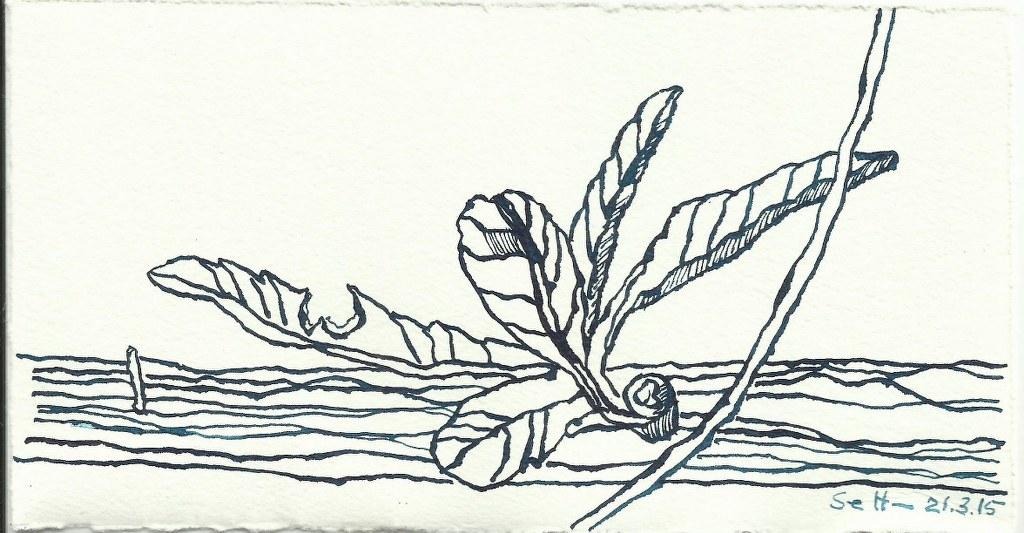 Natur (c) Zeichnung von Susanne Haun 0005