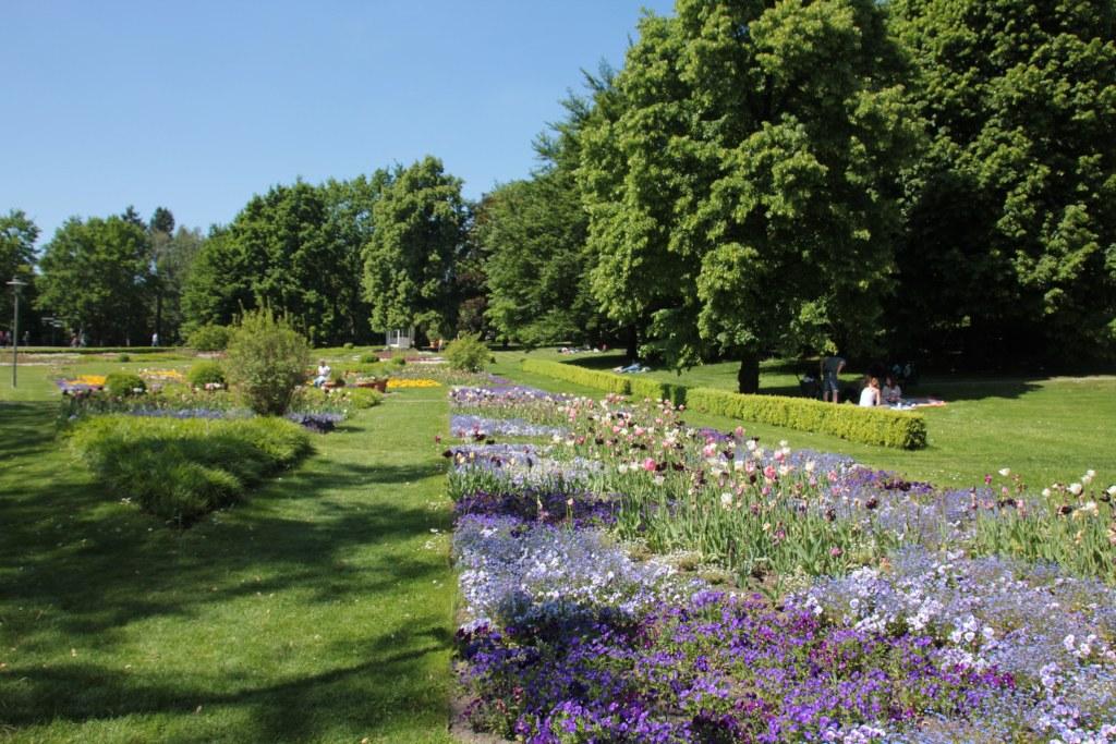 Verblühte Tulpen im Britzer Garten (c) Foto von Susanne Haun