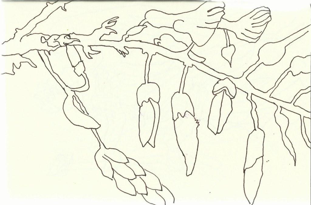 Glitzinie (c) Zeichnung von Susanne Haun