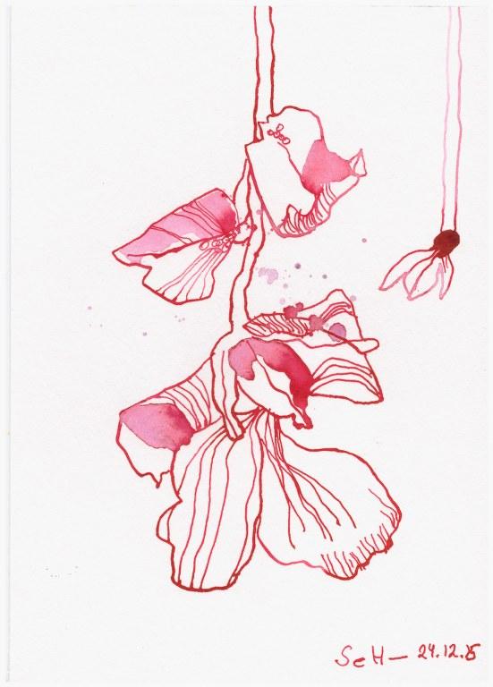Christrose (c) Zeichnung von Susanne Haun