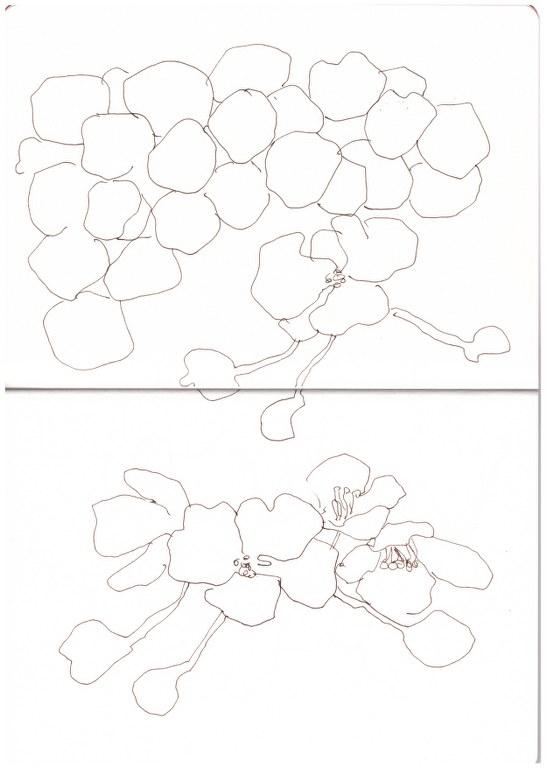 Vorüberlegung zum Urteil des Paris (c) Zeichnung von Susanne Haun
