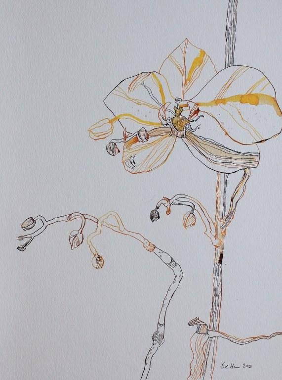 Orchidee und Schmetterling - Zwischenstand - 65 x 50 cm (c) Zeichnung von Susanne Haun