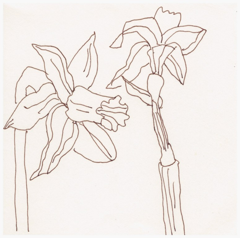 Osterglocken (c) Zeichnung von Susanne Haun