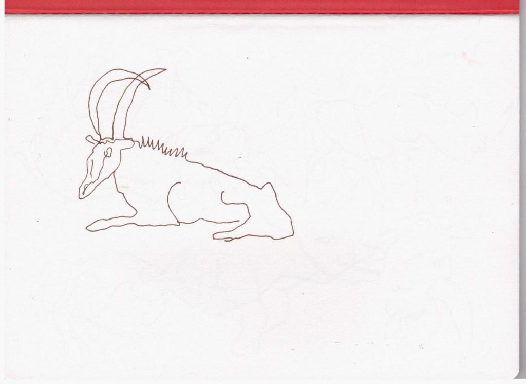 Antilope (c) Zeichnung von Susanne Haun