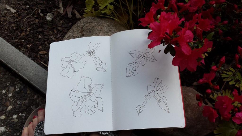 Azaleen in meiner Eltern Garten (c) Foto von Susanne Haun