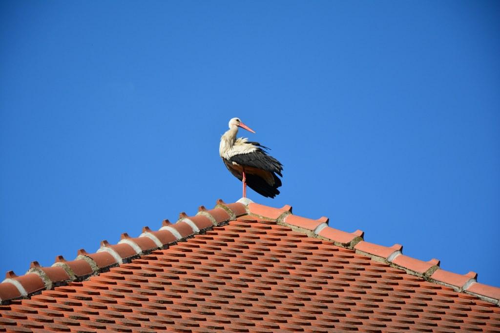 Der Storch auf dem Dach der Kirche in Roddahn (c) Foto von M.Fanke
