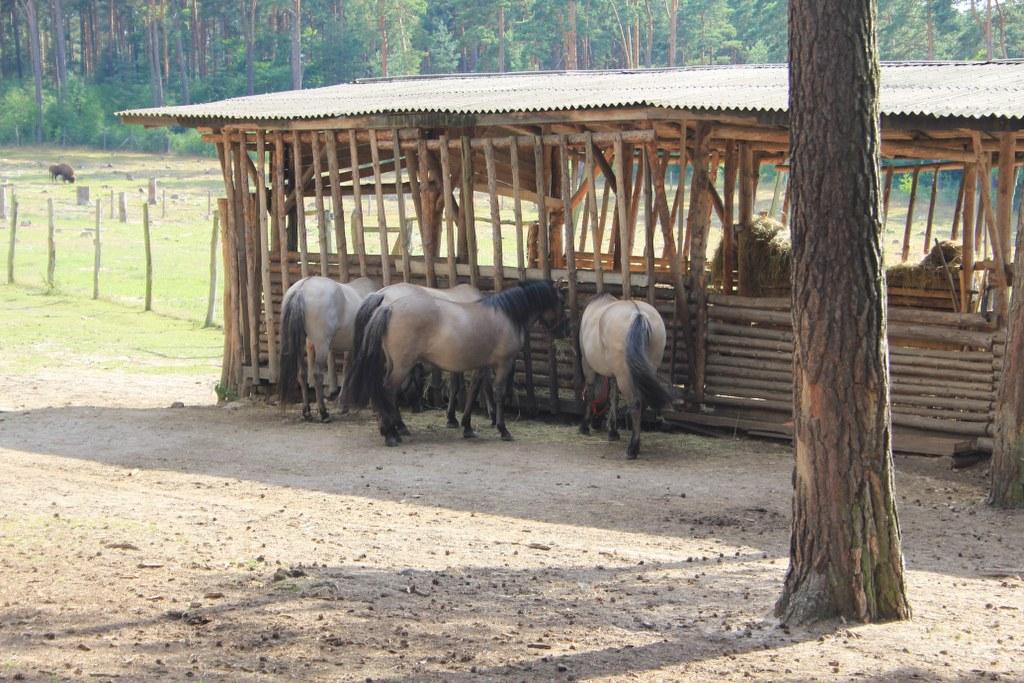 Wildpark Johannismühle (c) Foto von Susanne Haun