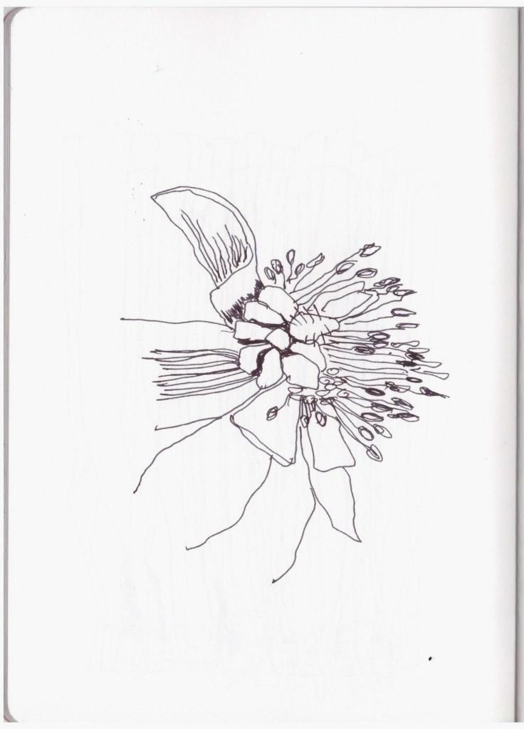 Nürnberg Tangetes (c) Zeichnung von Susanne Haun