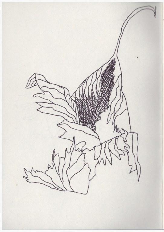 Nürnberg Laub (c) Zeichnung von Susanne Haun