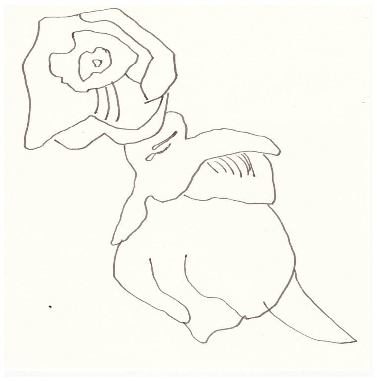 Eiben Blüte Zweig (c) Zeichnung von Susanne Haun