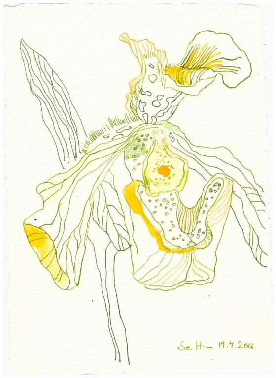 10 Weihnachtsangebot - Die ewig blühende Orchidee (c) Zeichnung von Susanne Haun